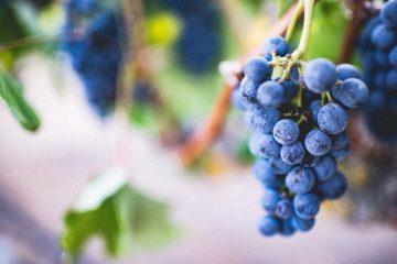 Wine tour in Algarve
